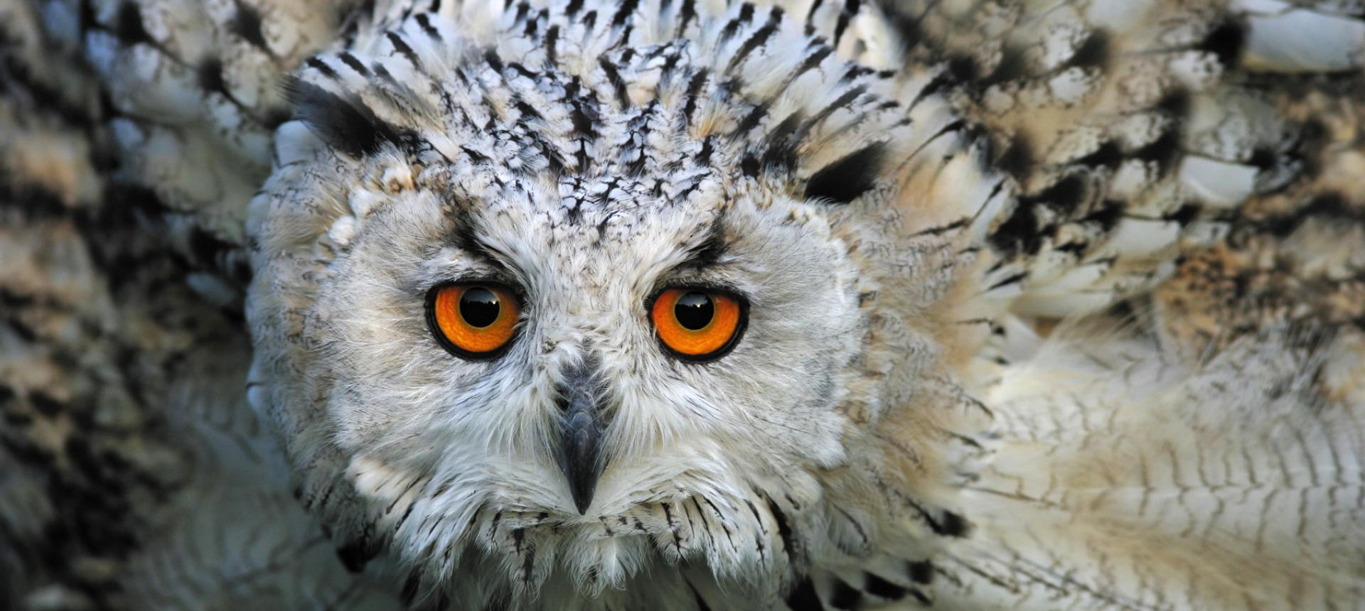 Reintroduction into the wild of an eagle owl, quarry Paderborn, Germany